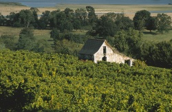 Vineyards of Anjou