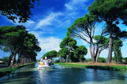 Row of umbrella pines lining the Canal du Midi in the Midi-Aquitaine region very popular for its river cruises