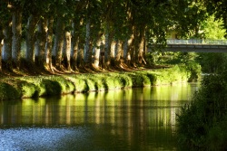Row of plane trees bordering the Canal du Midi in the Midi-Aquitaine region